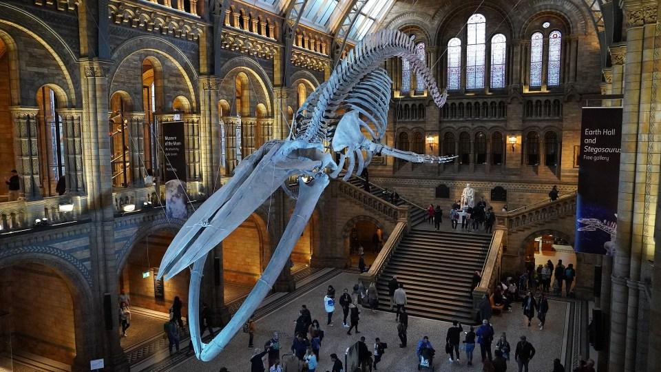 natural-history-museum-4587057_1920