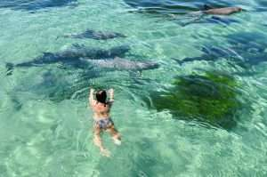 Swimming with Dolphins with Kangaroo Island Marine Adventures