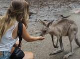 Want some yummy food little Kangaroo?