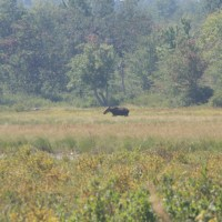 Moose! - Aug 2014
