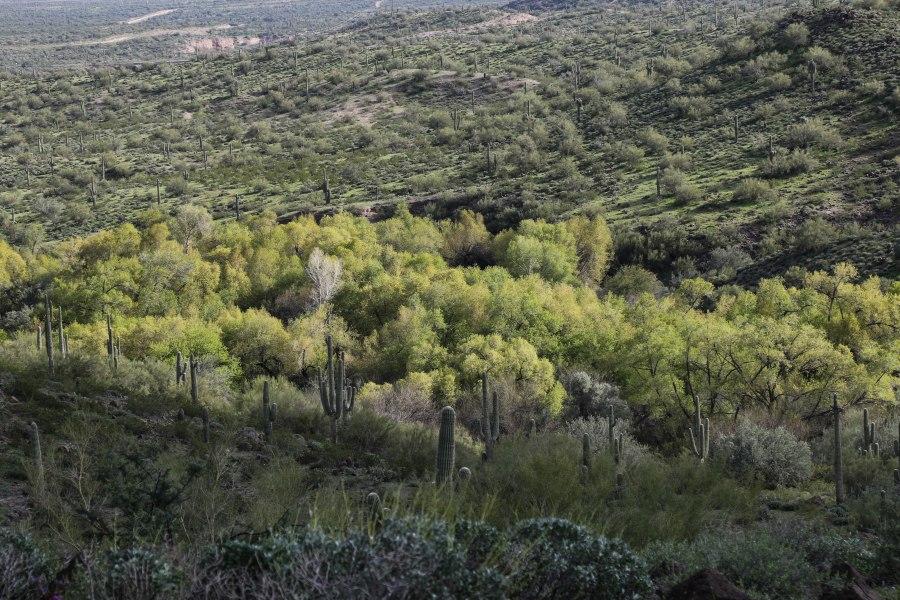 trail4-4M9A1202.jpg