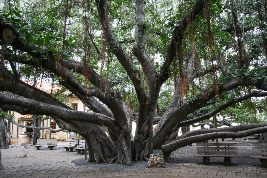 Tree2IMG_2851.jpg