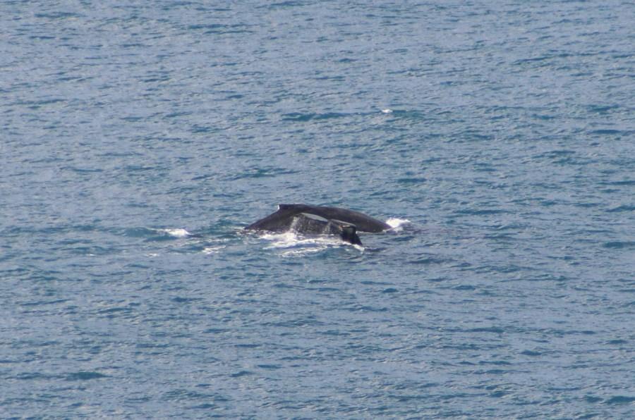 WhalesIMG_3101.jpg