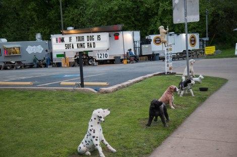 Dog1-IMG_7827.jpg