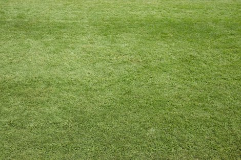 Grass2-IMG_8247.jpg