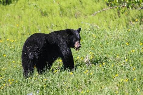 Bear2.jpg