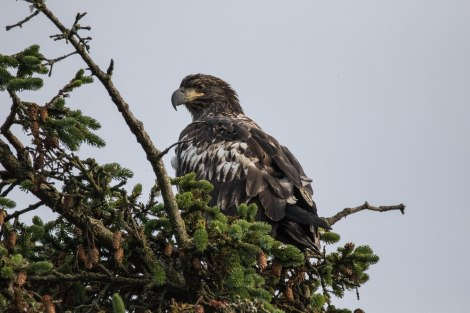 Eagle26.jpg