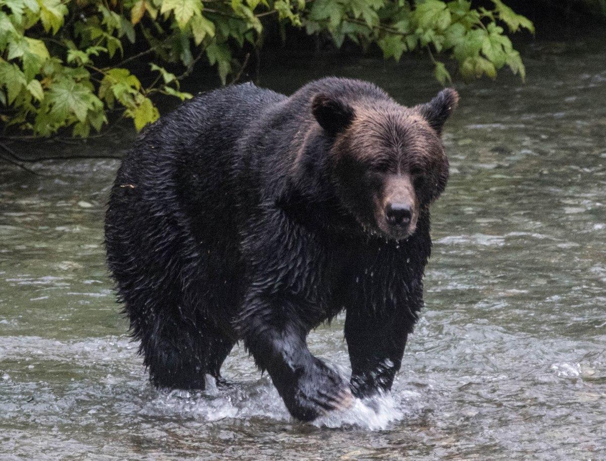 Alaska (16) Hyder - Aug 2017