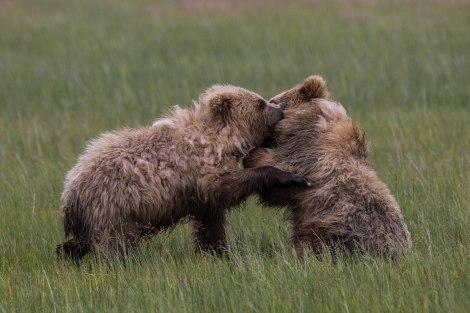 Alaska-06.jpg