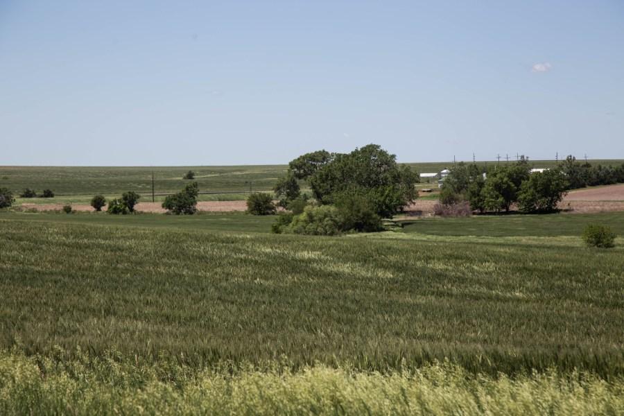 Wheat-03.jpg