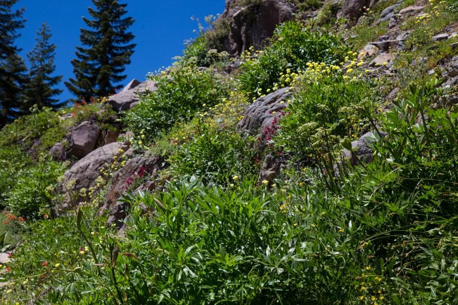 Trail-07.jpg