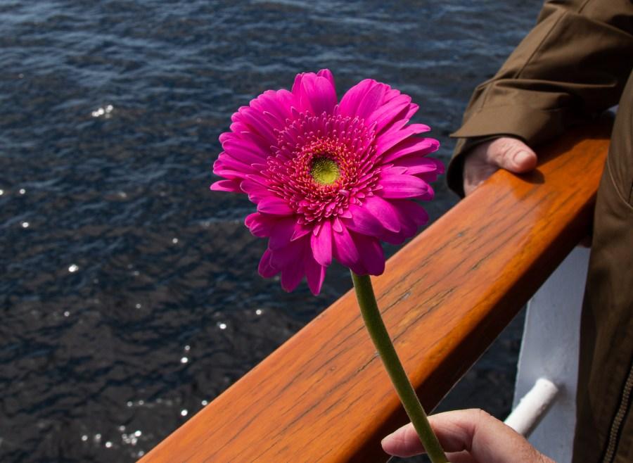 Flowers-01.jpg