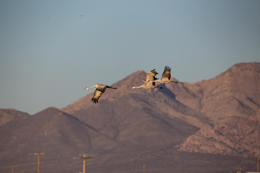 Cranes-03.jpg