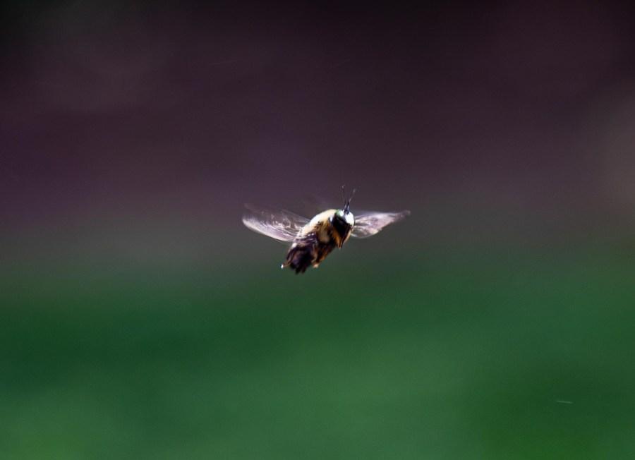 Bee-01.jpg