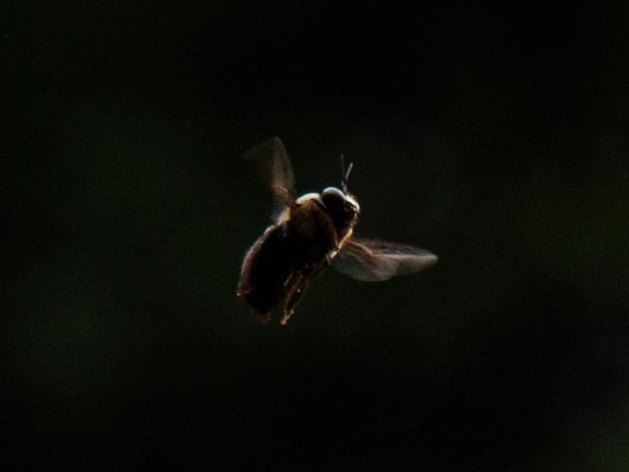 Bee-03.jpg