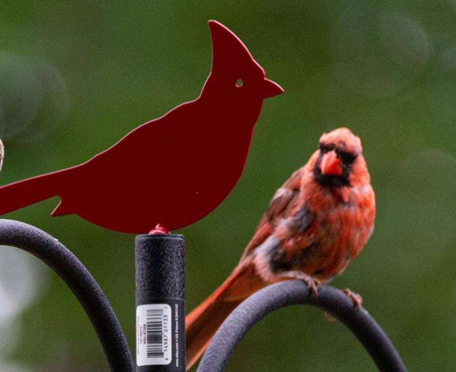 Birds-05.jpg