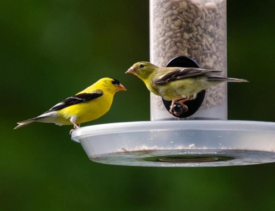 Birds-10