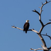 Oscar Shearer State Park - Feb. 2021