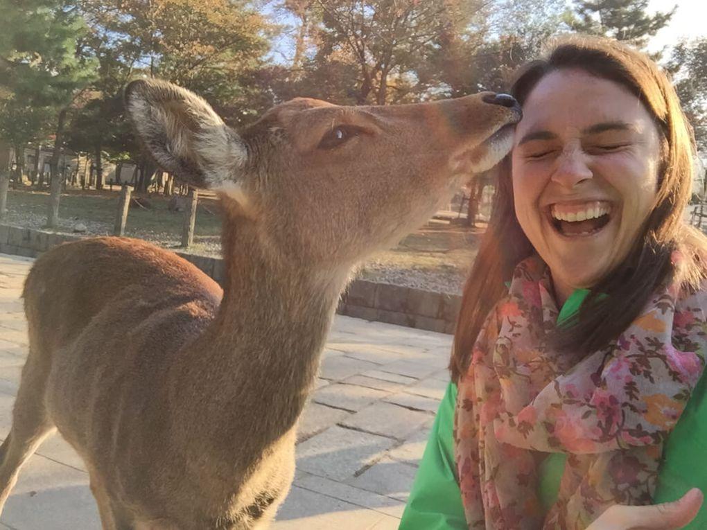 Japanese Deer Kisses in Nara