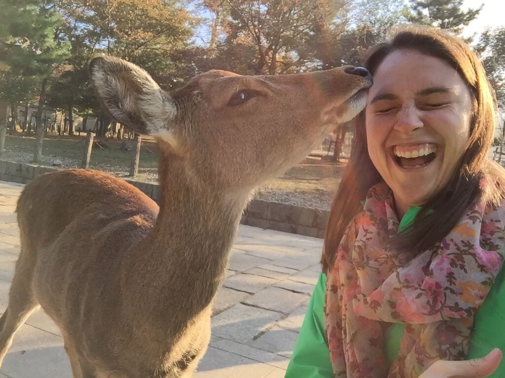 Japanese Deer Kisses in Nara