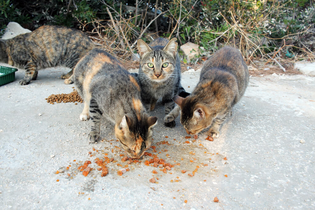 Croatian Cats