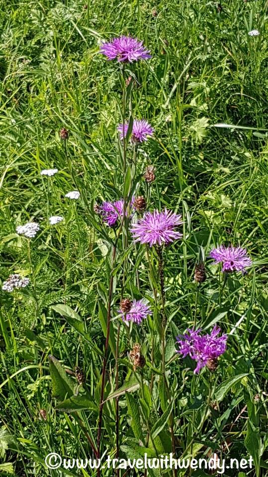 tww-farm-field-flowers-wackershofen-www-travelwithwendy-net