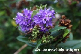 floral-delights-western-dingle-peninsula
