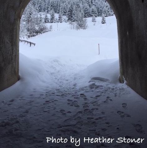 images-of-bavaria-heather