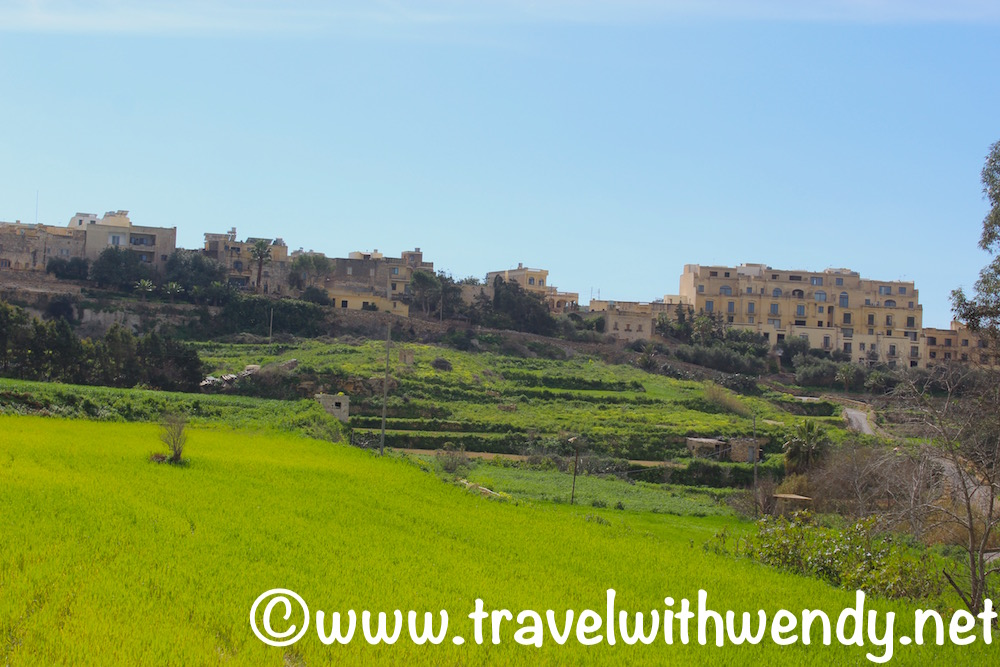 fields-of-tan-and-green-gozo