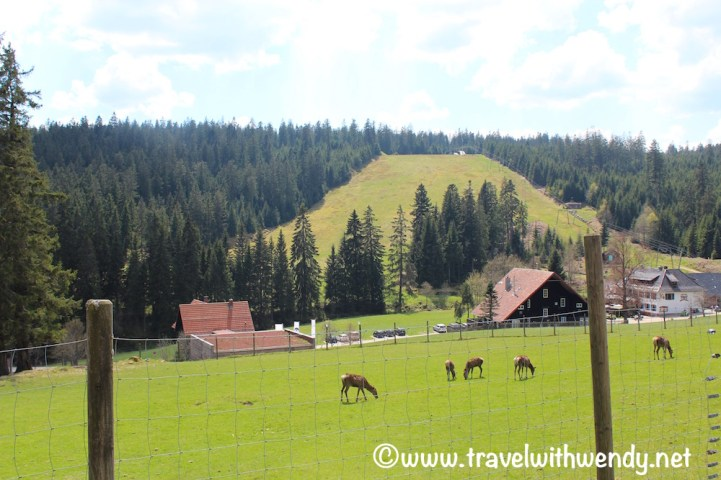 Black Forest Hiking
