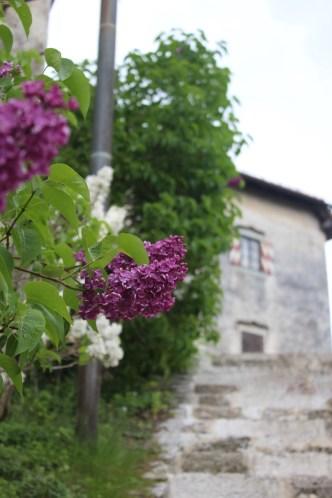 Spring flowers - Bled Castle