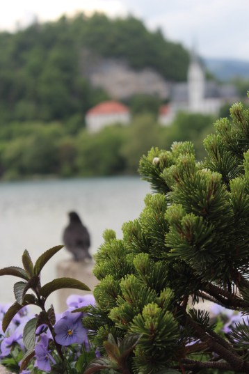 Views of Bled - Castle and St. Martins