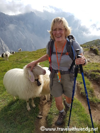 Lori and Sheep