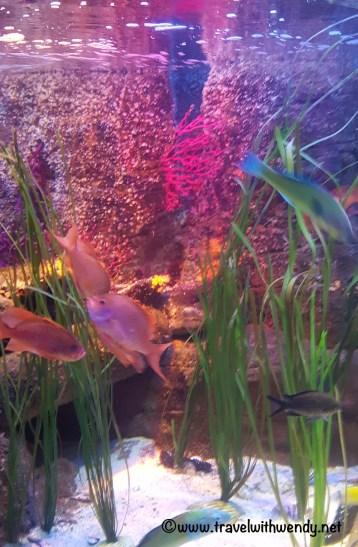 Sealife Aquarium - Pretty fish