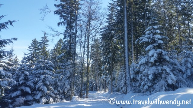 Cross-Country Skiing Paths