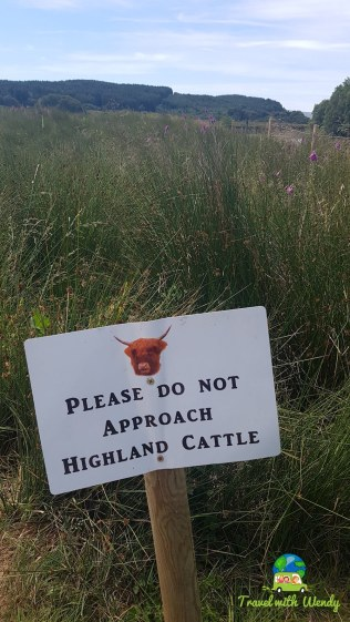 Please don't touch the furry cows! Scotland