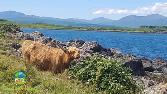 Making furry friends on the island of Kerrara