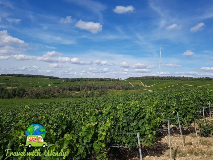 local vineyards around Ervy le chatel