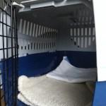 Inside of an Argos cat carrier