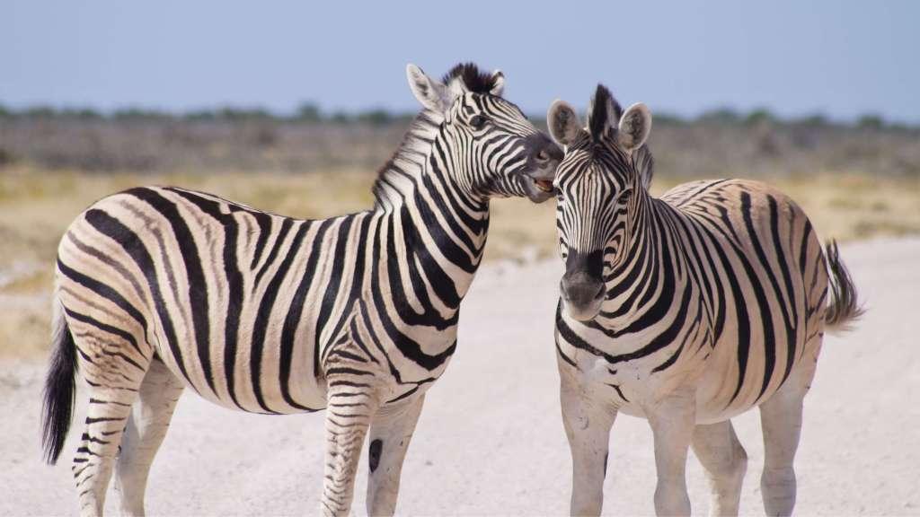 Kruger vs Etosha - which is best?