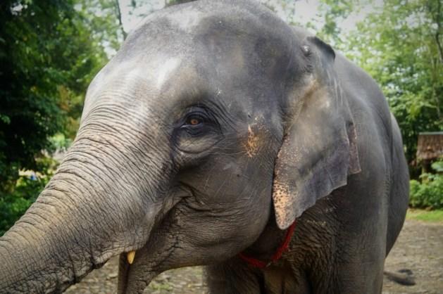 Thailand with kids - elephant
