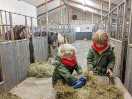 feeding the horses at Stóra-Ásgeirsá