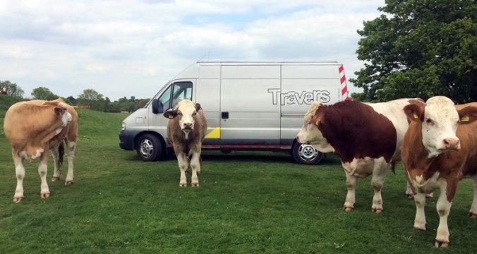 z-ESES-rnd-2--cows-hadleigh-park