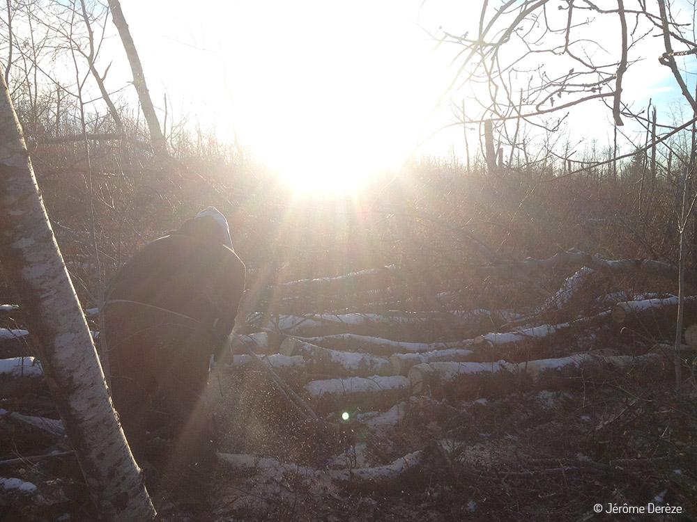Bénévolat entraîner des chiens de traineau