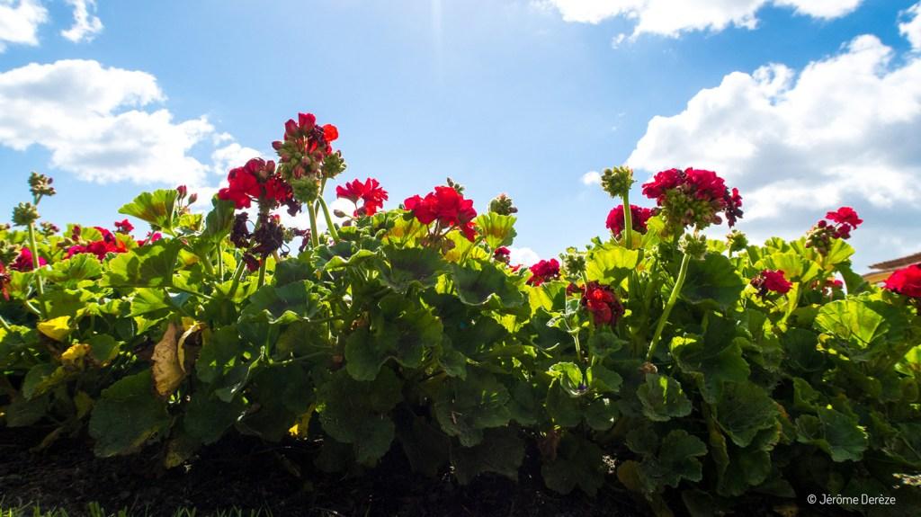 Jardin des sentiments à porto - fleurs à porto