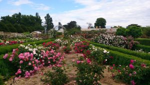National Rose Garden