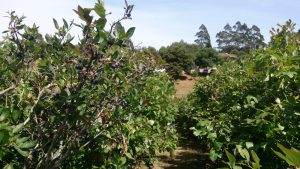Crestview Blueberry Farm