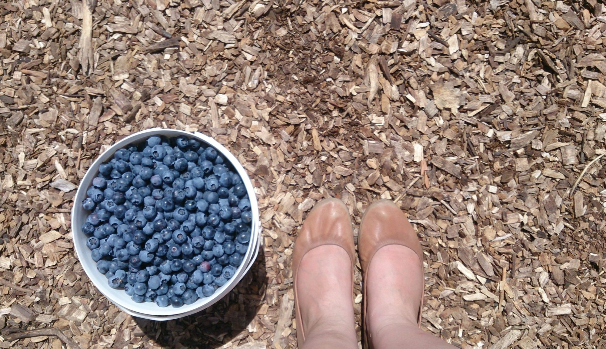 Traversing Crestview Blueberry Farm