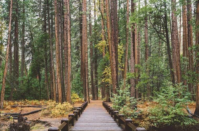 Senderismo y mindfulness: consejos para caminar practicando la atención plena