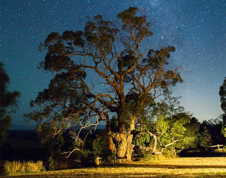 Las primeras caminatas nocturnas deben iniciarse al atardecer / Foto: Jacob Dyer